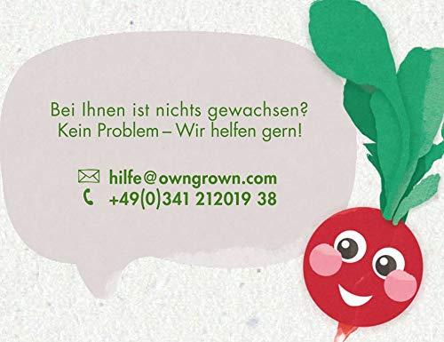 Gem/üse und Kr/äuter Samen Anzucht Set f/ür die Fensterbank als Geschenk f/ür Kinder und Familie Saatgut Anzuchtset mit 7 Sorten Mini-Garten Starter Kit von OwnGrown