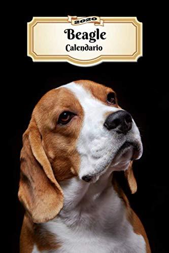2020 Beagle Calendario: 107 Páginas | Tamaño A5 | Planificador Semanal | 12 Meses | 1 Semana en 2 Páginas | Agenda Semana Vista | Tapa Blanda | Perro (Spanish Edition)