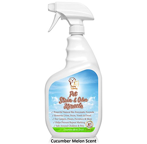 Pet Stain Amp Odor Miracle Enzyme Cleaner For Dog And Cat
