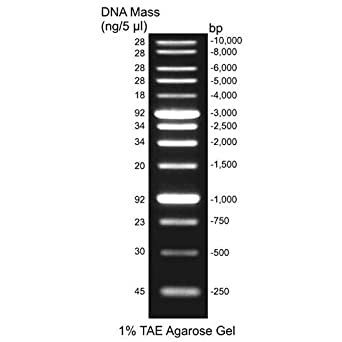 Amazon.com: Escalera de ADN de 2.2 lbs, 2,5 ug/25 uL ...