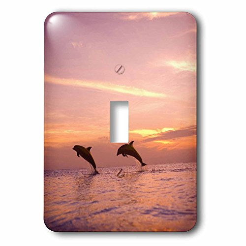 3dRose LLC lsp_86567_1 Bottlenose Dolphins, Roatan, Honduras Sa12 Swe0008 Stuart Westmorland Single Toggle Switch (Dolphin Switchplate)