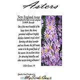 New England Aster Flower Big Pack 5,000 Seeds - Symphyotrichum novae-angliae