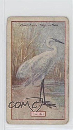 Egret Ungraded COMC Poor (Trading Card) 1921 Gallaher Animals & Birds of Commercial Value - Tobacco [Base] #86 from Gallaher Animals & Birds of Commercial Value