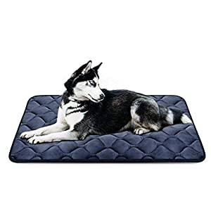 Comfy Armor Filled Waterproof Soft and Light Dog/Cat Mattress Bed (Black, Small)
