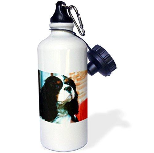 3dRose wb_981_1 Cavalier King Charles Spaniels Sports Water Bottle, 21 oz, White