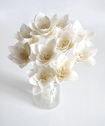 Plawanature Lily 2