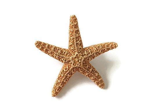 Magnetic Men's Sugar Starfish Beach Wedding Boutonnieres, 2 by Sea 2 Land Designs