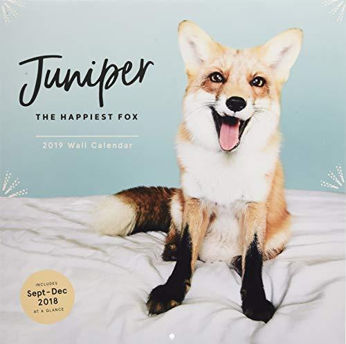 Juniper: The Happiest Fox 2019 Wall Calendar