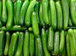 Heirloom Trellis (30seeds ORGANICALLY GROWN Persian Beit Alpha Cucumber Seeds Heirloom NON-GMO)