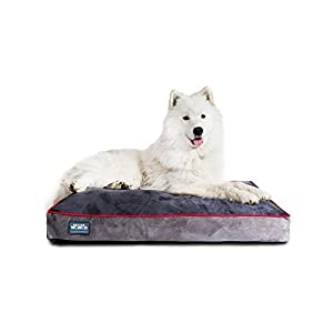 """Better World Pets 5-Inch Thick Waterproof Orthopedic Memory Foam Dog Bed with 180 GSM Removable Washable Cover, Medium (36"""" x 24"""" x 5"""") (Dogs 20-60 lbs.), Grey with Spanish Red trim"""