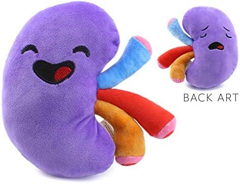 Amazon.com: Attatoy - Peluche de riñón con forma de órgano ...