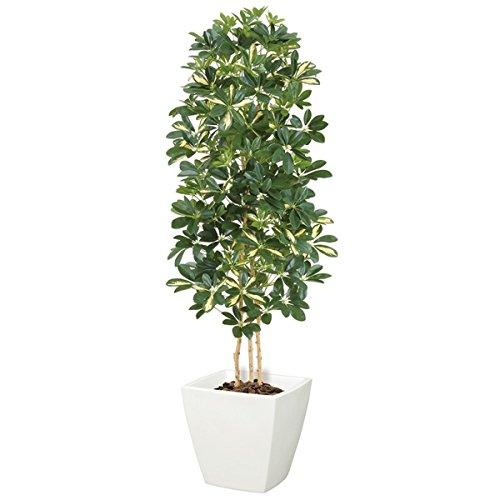 カポックツリー(M)(ナチュラルトランク)(グリーンクリーム)【インテリアグリーン(天然木と造花のコラボ)】《ポット(鉢)は別売りです》(NGT2029MGRCR) B00IM43BCK