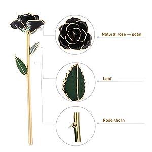 Gold Dipped Rose, Everlasting Real Rose Made from Real Fresh Long Stem Rose Flower, Great for Lover 81