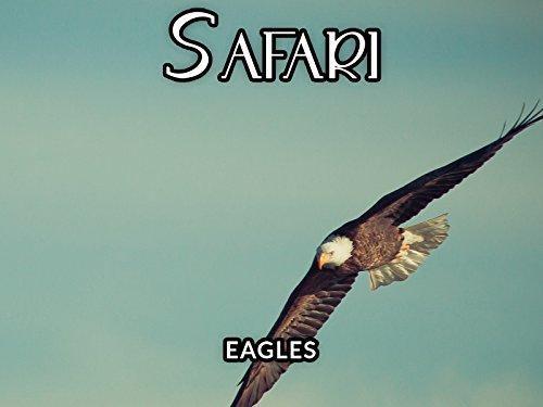 Eagles - Safari Wings