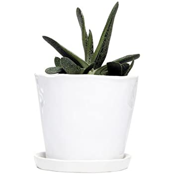 "Chive - Big Tika, Large Succulent and Cactus Planter - 5"" Ceramic Plant Pot with Drainage Hole and Detachable Saucer, Tray and Dish (White)"