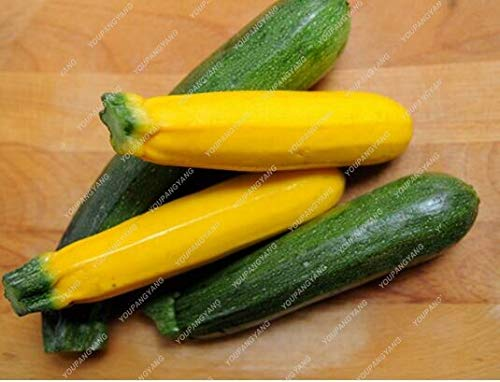 30Pcs Summer Squash Zucchini Seeds Vegetable Plant Home Garden Planting