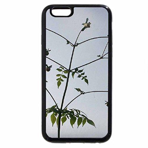 iPhone 6S / iPhone 6 Case (Black) Dahlia flowers