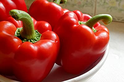 Big Red Sweet Pepper Seeds (Heirloom) 150 Seeds By JaysseedsTM Upc 643451294941