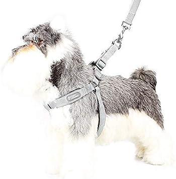 Lampop arnes de Perro: Amazon.es: Productos para mascotas