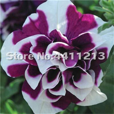 Petunia Seed Germination - Kasuki 200 pcs/Pack Bonsai Petunia Garden Bonsai Moon Night Sky Double Purple Flowers Purple Sky Black Petunia High Germination - (Color: 15)