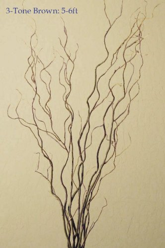 Dried Curly-Willow Branches Tone Brown