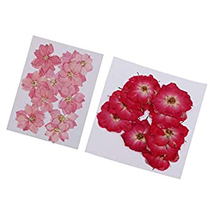 Baosity 22 Piece Pressed Dried Real Flower Delphinium Rose Scrapbooking Embellishments for Jewelry Making DIY Pendant Charms Resin Ornament Craft 2-3cm 38