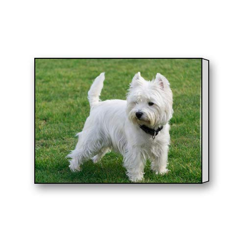 (Du Art Gifts West Highland White Terrier Custom Canvas Print Personal Photos Print on Canvas Ready to Hang on Your Wall as a Modern Art 16