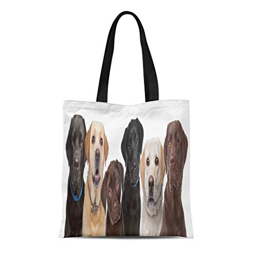 - Semtomn Cotton Canvas Tote Bag Beige Six Portraits of Labrador Dogs in Row Brown Reusable Shoulder Grocery Shopping Bags Handbag Printed