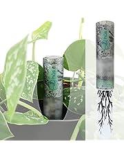 hûs+ flower eco 【 A babysitter voor je planten 】 Digitale gietindicator incl. 10 jaar batterij * vochtmeter voor planten vochtmeter Bodemtester