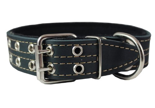 "Genuine Leather Dog Collar, Padded Black 1.5"" Wide. Fits 18""-22"" Neck Size Cane Corso Rottweiler"