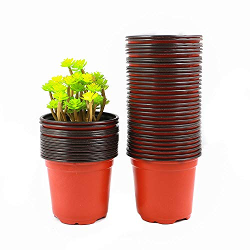 4in plastic pot - 3