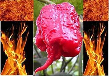 PlenTree 100 Carolina del Reaper Semillas Hp22B Mã¡s Caliente de la Pimienta en la Tierra! Venta al por Mayor Rã©Cord Mundial