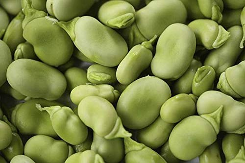 Bean, FAVA Windsor Bush, Heirloom, Organic 500+ Seeds, Non-GMO, Buttery N Healty