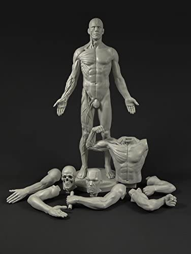 Amazon Com Male Adaptable Anatomy Figure 13 4 Inch Anatomical Reference For Artists Grey