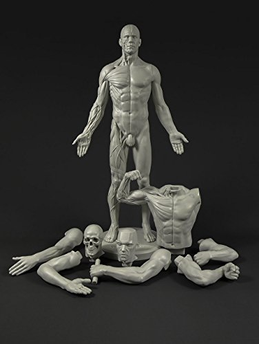 Male Adaptable Anatomy Figure: 13.4-inch Anatomical Reference for Artists (Grey) by 3dtotal figure collection