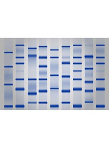 LDS Sample Buffer [4X] 250 ml - by Cepham Life Sciences