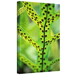 "Art Wall ""Hawaiian Laua'e Fern"" Gallery Wrapped Canvas Art By Kathy Yates, 32 By 48-inch"
