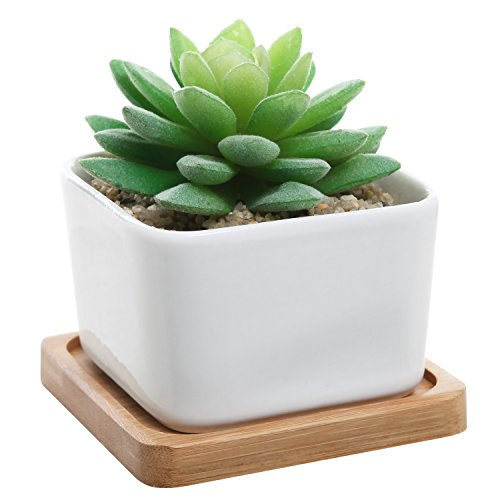 Modern Decorative Ceramic Succulent Draining