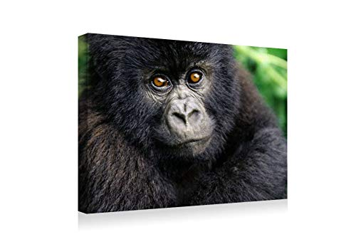 SHADENOV Canvas Prints Wall Art - Gorilla Baby cub Hairy - Modern Home Deoration Wall Decor Printing Wrapped Stretched Canvas Art Ready to Hang 20x14 Inches