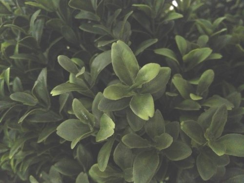 Silk Decor 1 4'TRI Ball Boxwood TOP.(P) GRTT Greenery, 48-in, Two Tone Green