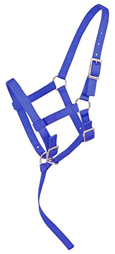 Tough 1 Adjustable Weanling Foal Nylon Halter with Removable Nylon Catch Strap. Color Choicce (Royal Blue)