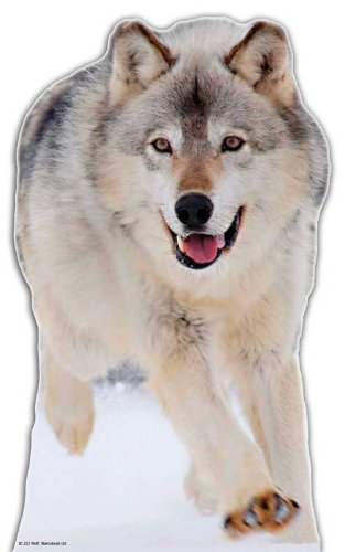 Wolf - Wildlife/Animal Lifesize Cardboard Cutout / Standee / Standup