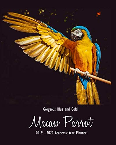 Gorgeous Blue and Gold Macaw Parrot 2019 - 2020 Academic ...
