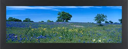 Easy Art Prints Panoramic Images's 'Texas Bluebonnets (Lupininus texensis) Flowers in a Field, Texas Hill Country, Texas, USA' Premium Framed Canvas Art - 36