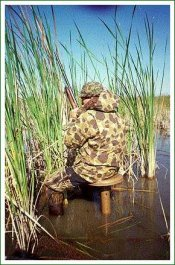 swamp seat - 4