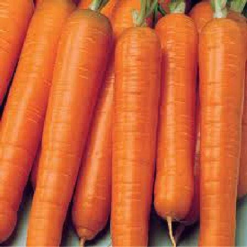Shopmeeko Seed Carrot Early NANTUS Vegetables Seed (Pack of 50 Seed X 1 PER PKTS) 1 Carrot Early NANTUS Seed (50 per Packet) ()