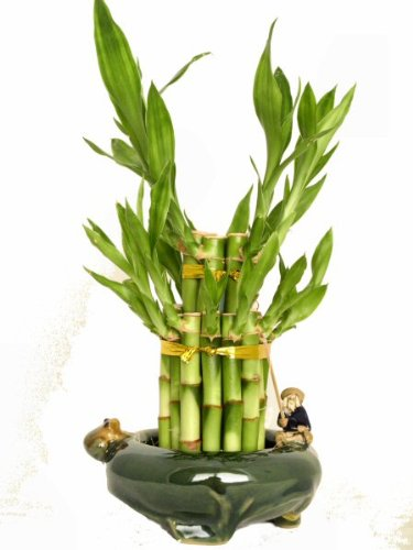 KL Design & Import - 2 Tier Bamboo Tower in a Hand Made Ceramic Fisherman and Frog Vase *Perfect - Perfect Vase Gift