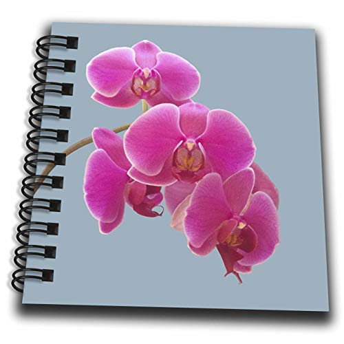 Orchid Photograph - 3dRose Natalie Paskell - Flora and Fauna - Pink Orchids Photograph in Paint Effect. - Mini Notepad 4 x 4 inch (db_293377_3)