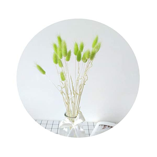 20pcs Natural Dried Flowers lagurus White Artificial Flowers Colorful Fake Rabbit Tail Grass ovatus Foxtail Bouquet Long Bunches,Green