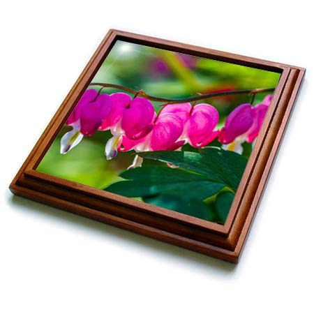 Curved Heart Pink (3dRose Alexis Photography - Flowers Bleeding Heart - Curved line of pink bleeding heart flowers. Green leaves - 8x8 Trivet with 6x6 ceramic tile (trv_288816_1))
